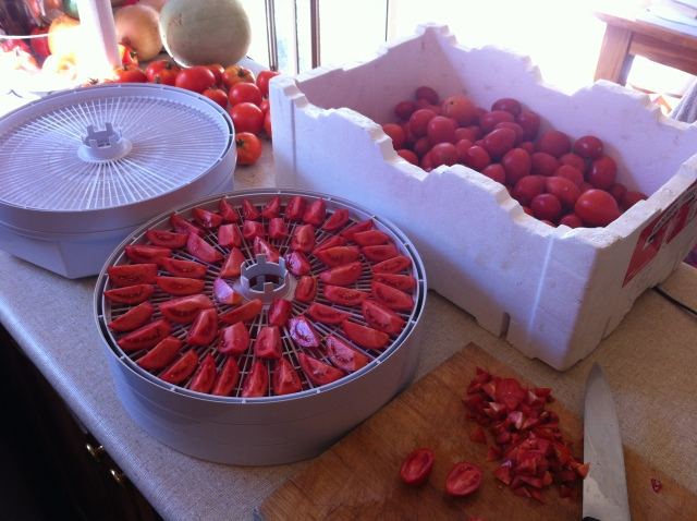 The annual tomato preserving marathon
